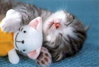 Como cuidar a tu lindo gatito..!!!