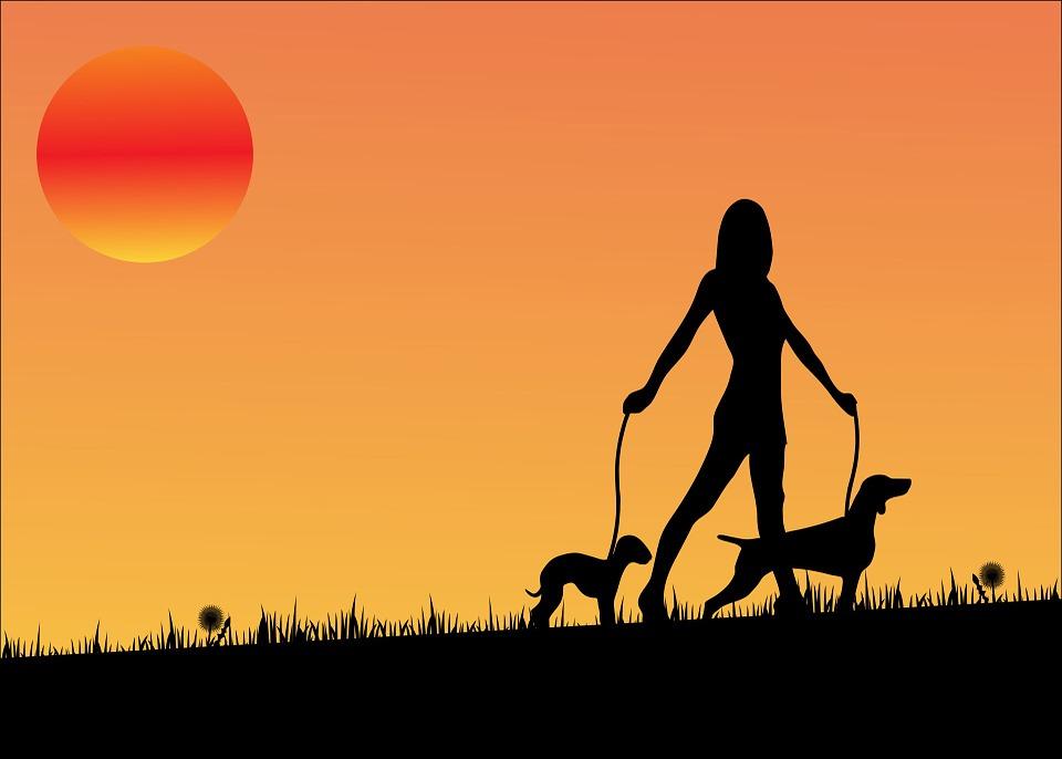 Puesta De Sol, Perro, Perros, Caminar, Mujer, Dama